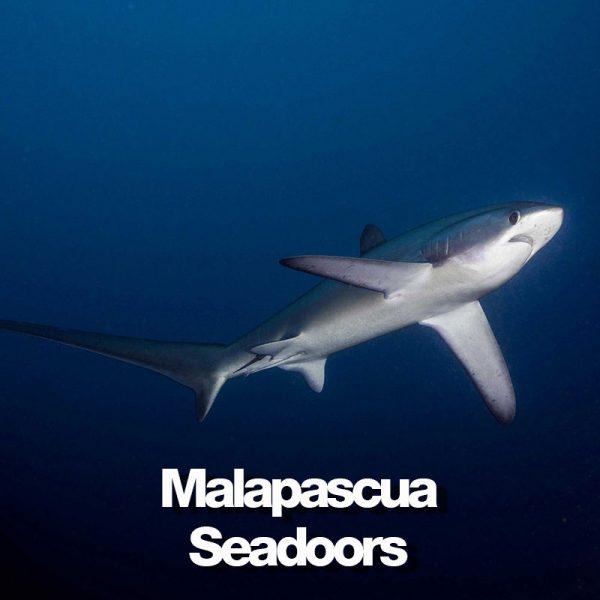 produit-malapascua-