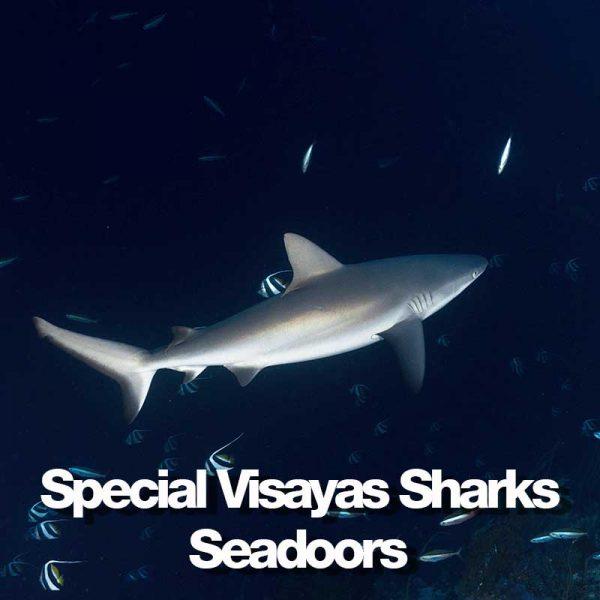 produit-special-sharks-.jpg